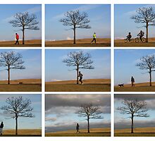 Five Minutes in the Life of a Tree  - Hogganfield Glasgow by simpsonvisuals