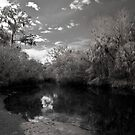 Little Manatee River State Park B&W 1 by MKWhite