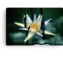 Underwater Lily Canvas Print