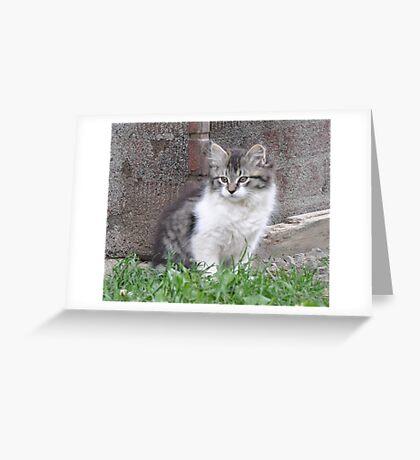Ferocia Kitten Greeting Card