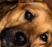 Labrasation dog - (Labrador & Alsatian) ....Yeah? Sticker