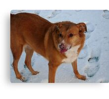 What`s Snow Funny! Canvas Print
