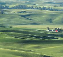 Palouse Valley farm by Linda Sparks