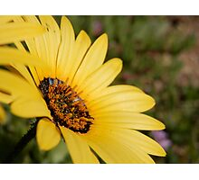 Sunshine Flower Photographic Print