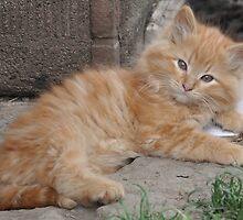 Bruce the Kitten by rebfrost