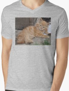 Bruce the Kitten Mens V-Neck T-Shirt