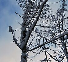 Snow and branches by Carolyn Stringer