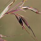 Grass Seed by Julie Sherlock