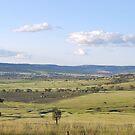 Coolah Valley NSW by Julie Sherlock