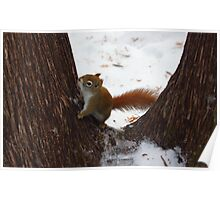 Squirrel climbing a tree Poster
