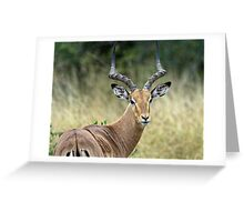 Impala Male Greeting Card