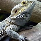 Bearded Dragon by TheWalkerTouch