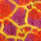 Mosaic Sea Star Macro by Andrew Trevor-Jones