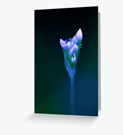 Out of the Blue - chive flower  Greeting Card