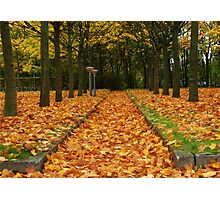 Autumn carpet Photographic Print
