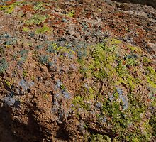 Colorful Lichens in Arizona's Sonoran Desert by David F Putnam