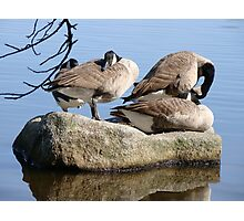 Canadian geese Photographic Print