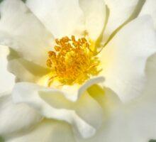 A white bloom. Sticker