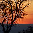 African winter sunset by Heather Thorsen
