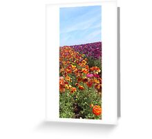 Flower Fields Greeting Card