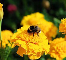 Springtime Delight by Marita Sutherlin