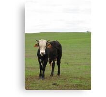 Valley Cows Canvas Print