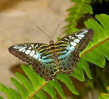 Blue Clipper by PatGoltz