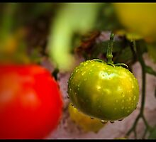 One Green Tomato by tvlgoddess
