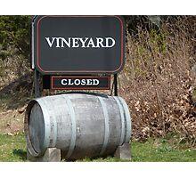 stonington vineyard Photographic Print