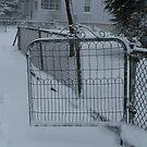 Snow storme by Dalmatinka