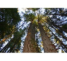 Giants Reaching for the Sky Photographic Print