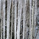 Icicles and Aspens by Carin Fausett