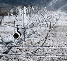 Sprinklers - Frozen  by Carin Fausett