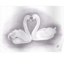 Love heart swan necks Poster