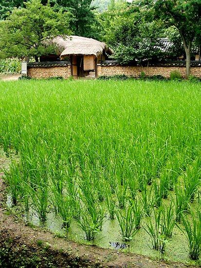 Rice Farm by William Dyckman