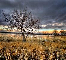 Winter Trees Sunset by Bob Larson