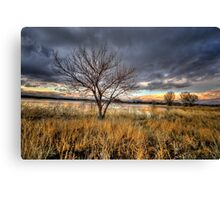 Winter Trees Sunset Canvas Print