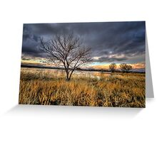Winter Trees Sunset Greeting Card