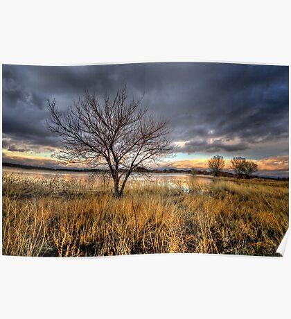 Winter Trees Sunset Poster