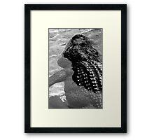 Gator Country Framed Print