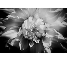 Natural Expansion Photographic Print