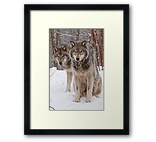 Timber Wolf Pair Framed Print