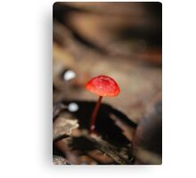 "Mycena viscidocruenta aka ""Ruby Bonnet"" Canvas Print"