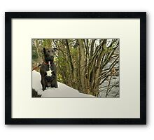 Queen Of The Lake District.. Framed Print