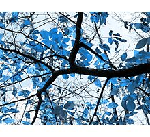 Cerulean Leaves Photographic Print