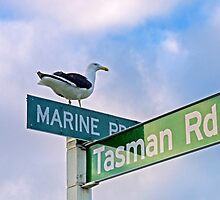 Gull at the Crossroads by TomRaven