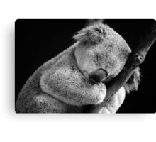 Wake Me Later - Sleeping Koala Canvas Print