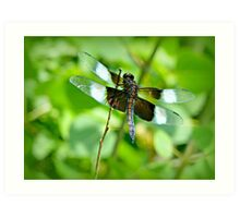 ADVICE FROM A DRAGONFLY Art Print