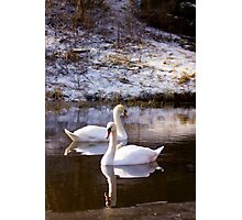 Swan Lake Photographic Print