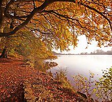 Autumn Pool by John Keates